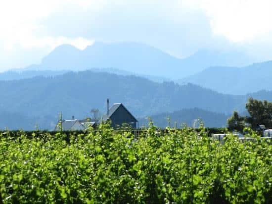 Cloudy bay vin upplevdryck