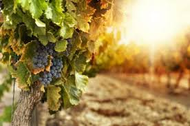 Marlborough vin upplevdryck 3