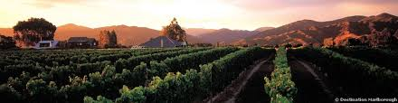 Marlborough vin upplevdryck