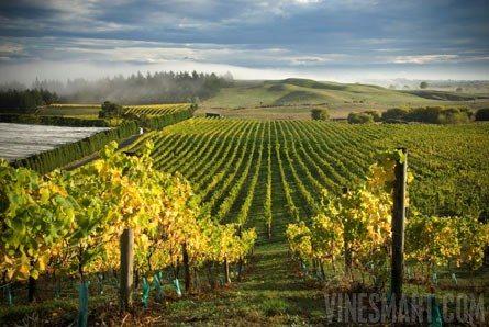 nya zeeland vin upplevdryck