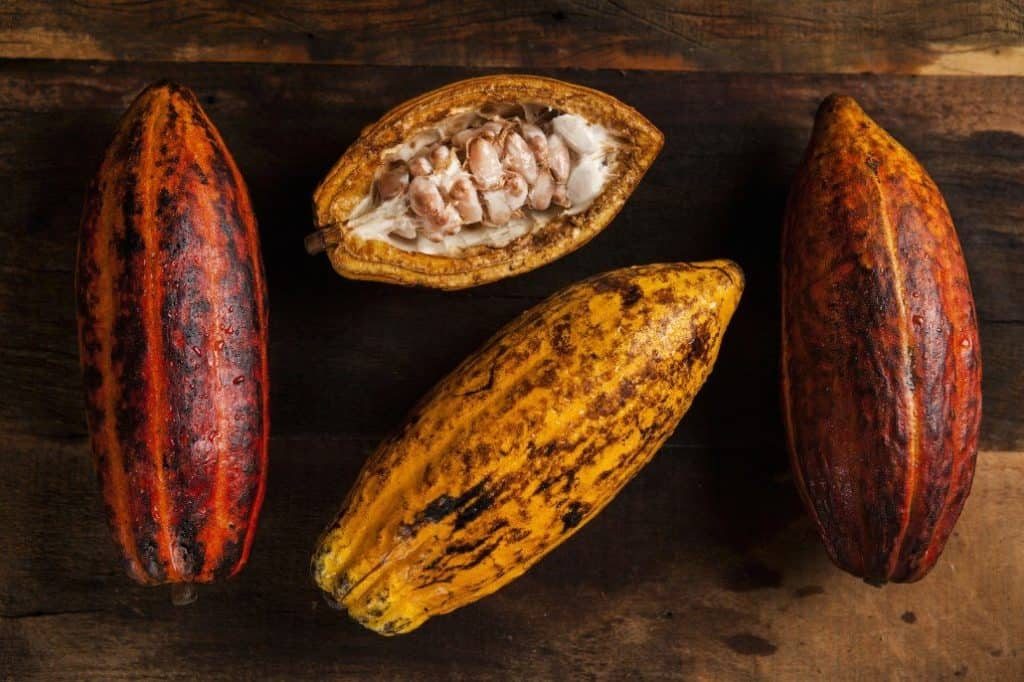 Chokladens Historia