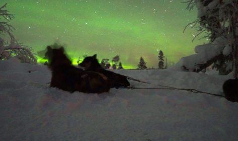 Hundspann och norrsken