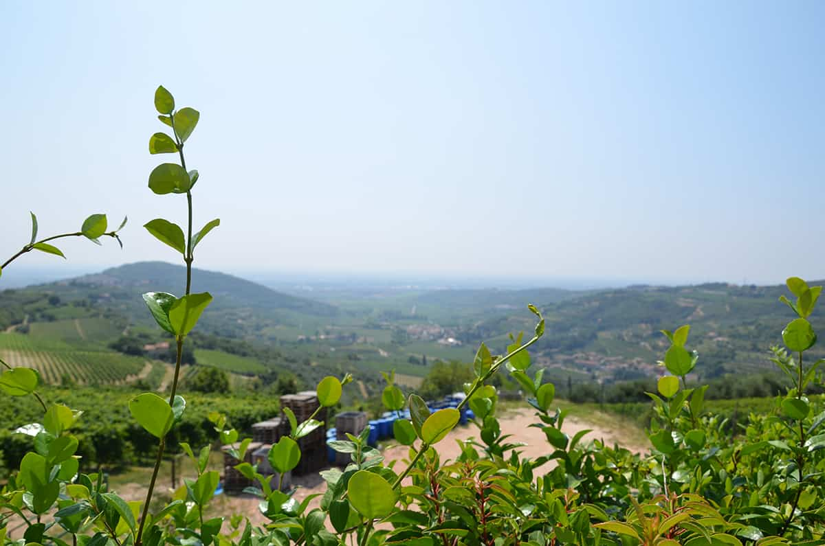 Utsikt över Valpolicella och dess vingårdar